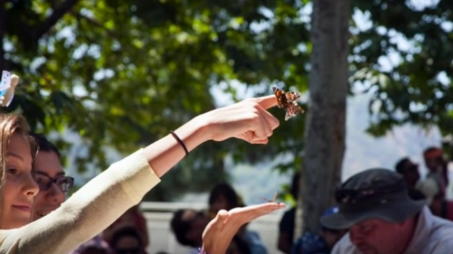 Pasadena Pretty: Grand Butterfly Release