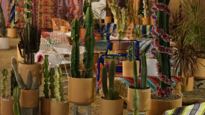 Holiday Cactus Lot Offers a Spiny Spin on Christmas Trees
