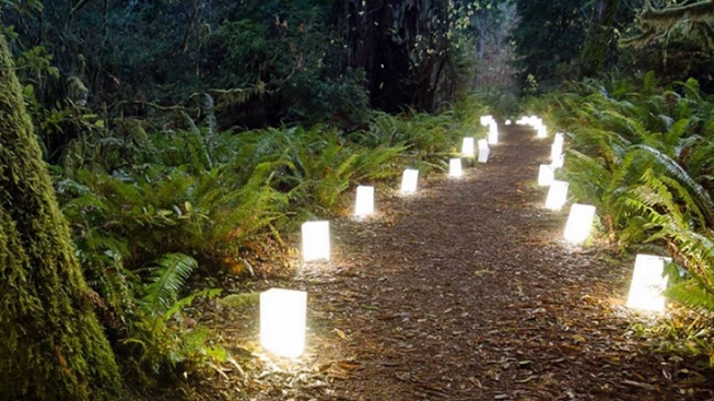 Take a Candle-Shimmery Walk in the Redwoods