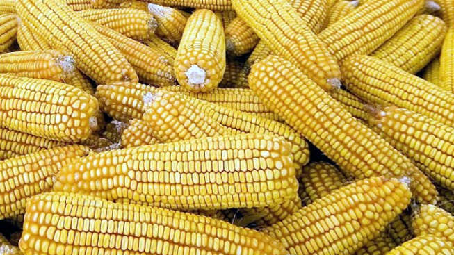 Prop. 37 Food-Labeling Law Fails