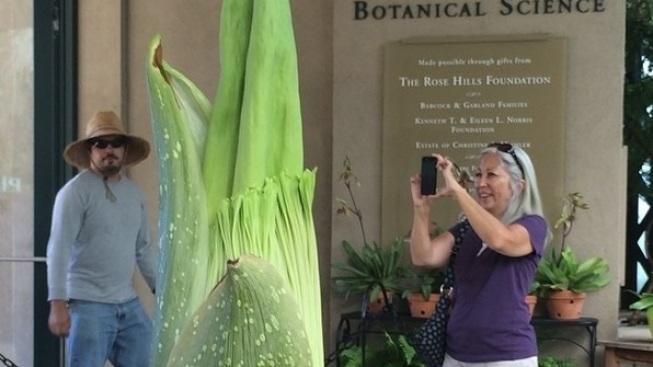 Smell This: Stinky the Corpse Flower's Back, San Marino