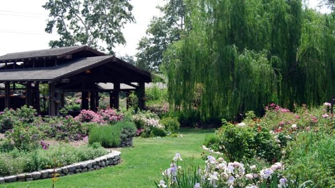 Descanso Gardens New: Maple Restaurant