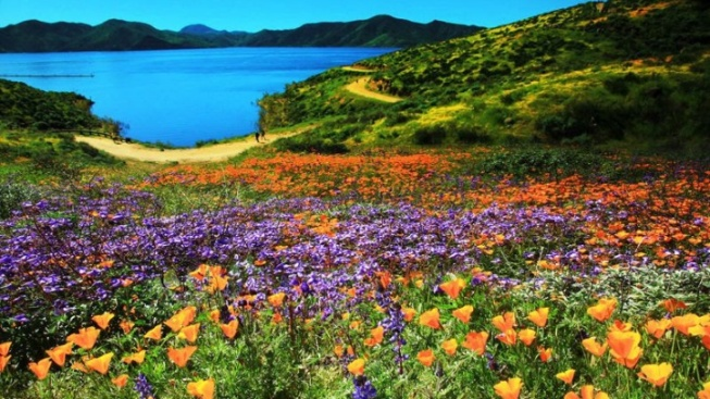 Superbloom Begins at Diamond Valley Lake, Near Hemet