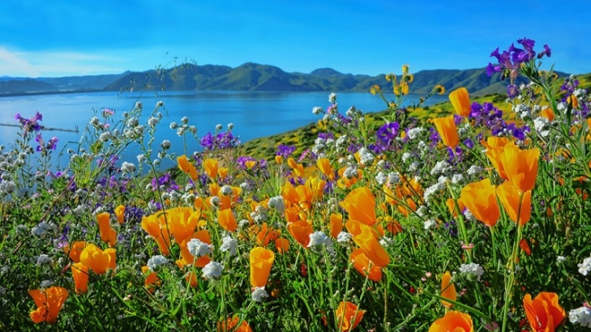 Wildflower Trail Opens as Potential Superbloom Nears