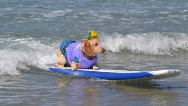 Surfer Dogs, It's Time to Register for School