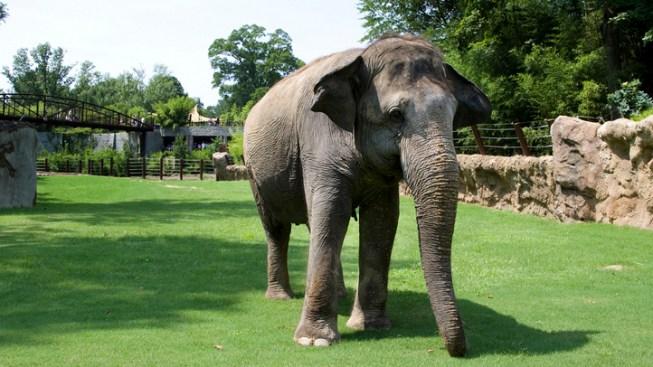 No More Elephant Rides at OC Fair