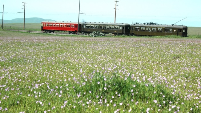 Wildflower Train: Solano County Springtime