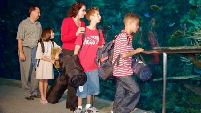 Discounts and Sleepovers: Aquarium Holidays