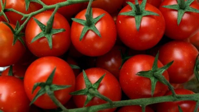 The Tomato Takes Tinseltown