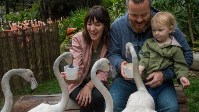 Mingle with Flamingos at LA Zoo's New To-Do