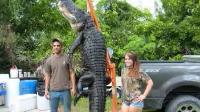 Florida Man Catches 800-Pound Gator with Fishing Pole - NBC
