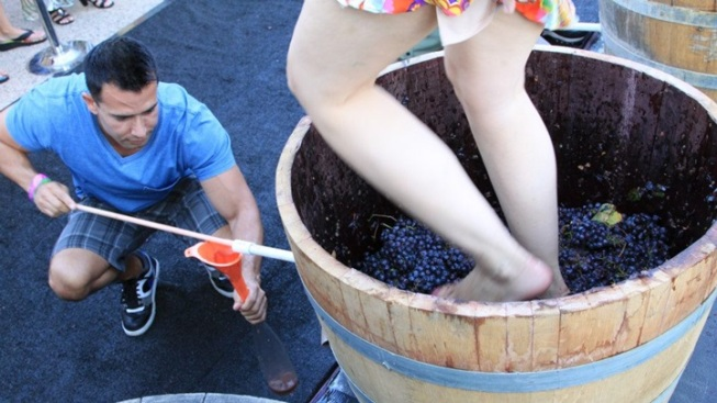 Ponte Winery Party: Grape Stomp Time