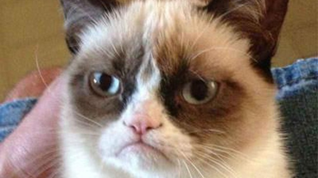 Online Feline: Grumpy Cat in SoCal