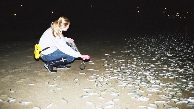 The Grunion Are on Approach