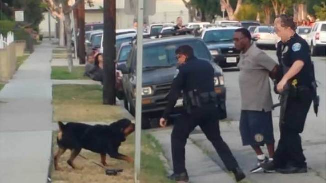 man whose rottweiler was shot by police sues city of hawthorne