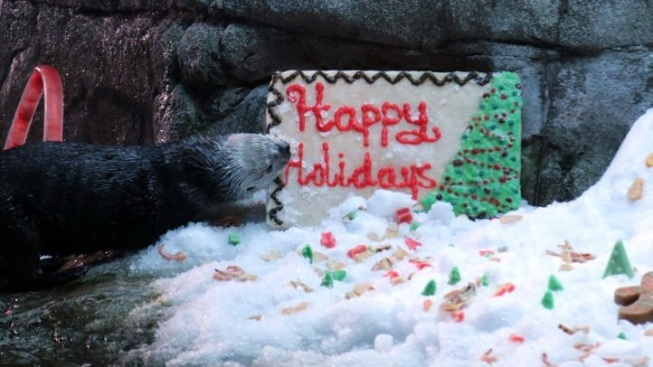 Aquarium Otters: Icy Holiday Treats