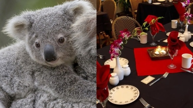 San Diego Treat: Breakfast with Koalas