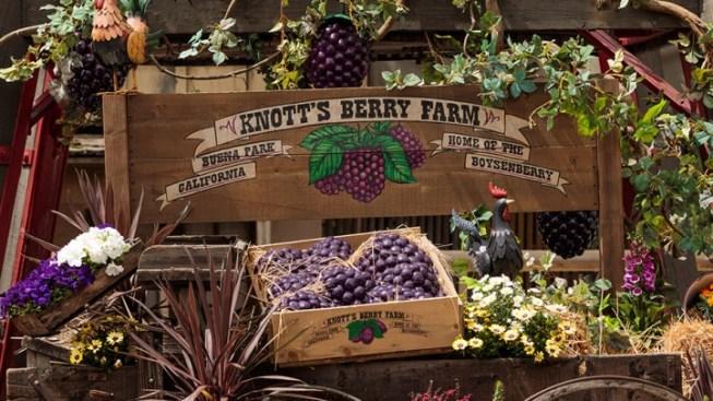 Get Smart 'n Tart Tips for Knott's Boysenberry Fest