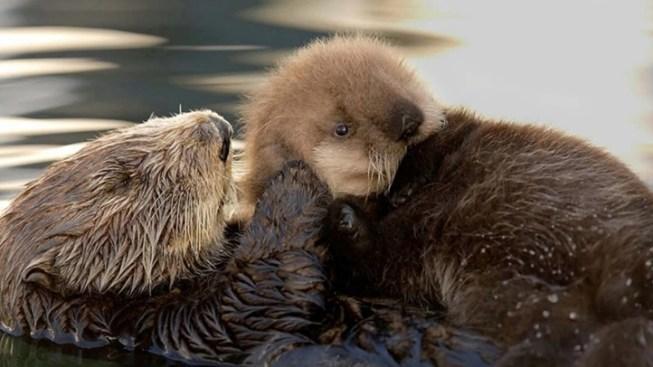 Luna: A Sea Otter's Story