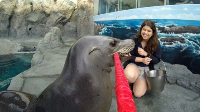 Aquarium Smile: Sea Lion Selfie Stick