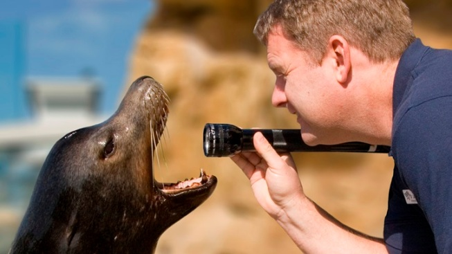 Marine Animal Medical: Visit the Aquarium Care Center