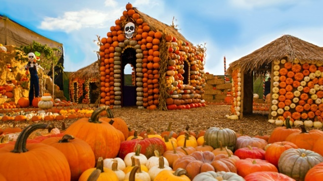 Mr. Bones Pumpkin Patch: Movie Star Pumpkins