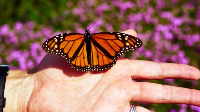 NHM Butterfly Pavilion: Final Day