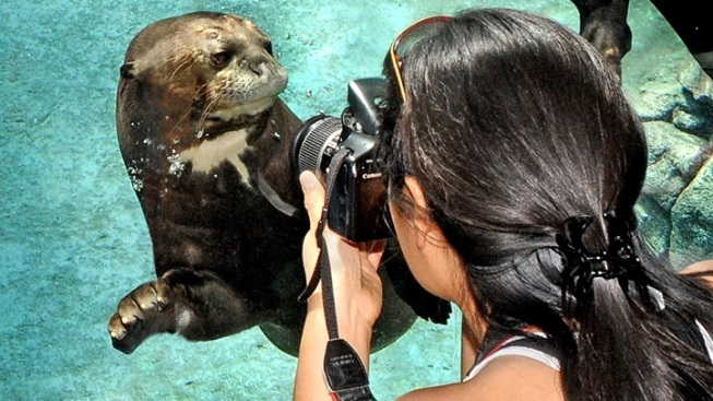 27th Annual LA Zoo Photo Day