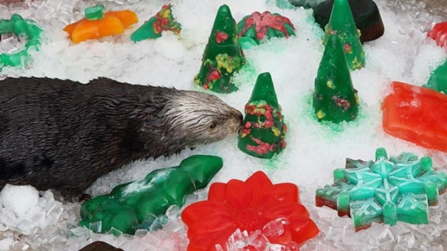 Monterey Merry: The Otters' Christmas Treats
