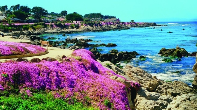 Countdown to Magic Carpet Time, in Pacific Grove