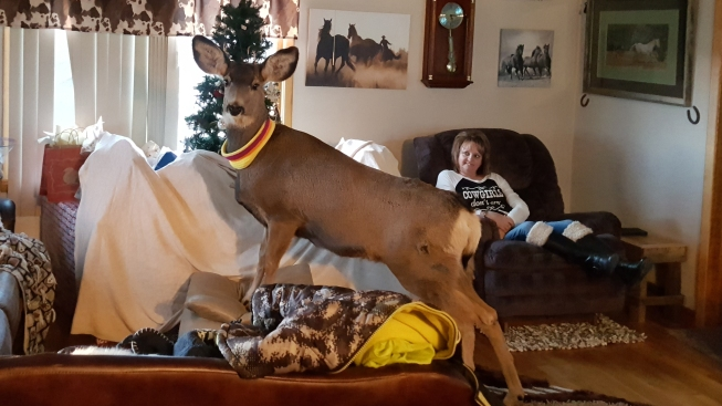 [LA Gallery] Pet Deer Shot and Killed in Front of Family