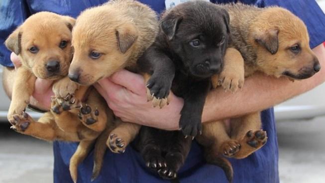Pet Orphans Welcomes Dog-Loving Volunteers