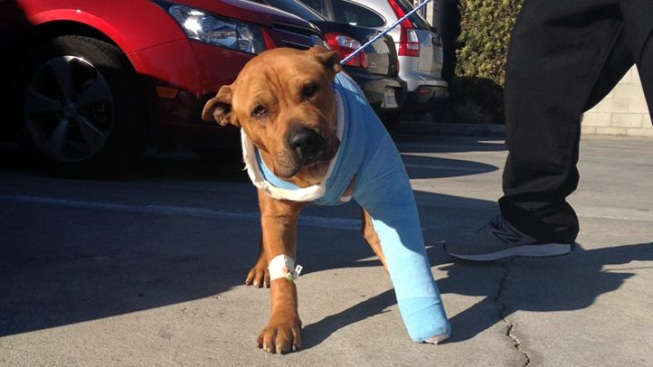 """Three LAPD Officers Become """"Foster Mommies"""" for Dog Struck by Car"""