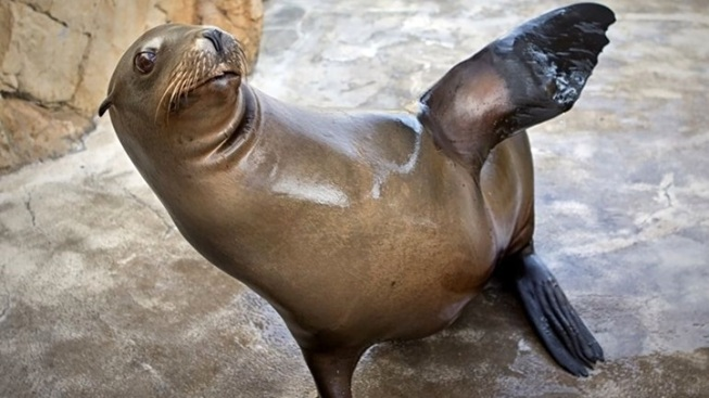 Seal and Sea Lion Habitat: Aquarium Redo