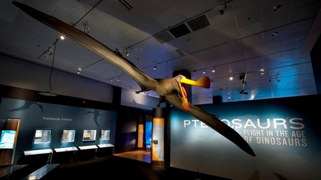 Pterosaurs Land at Natural History Museum Exhibit in Exposition Park