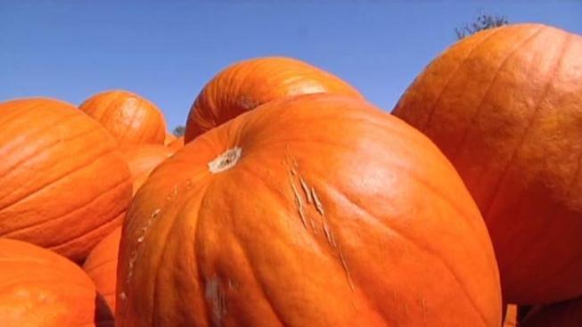 Cal Poly's Very Gourd Pumpkin Festival