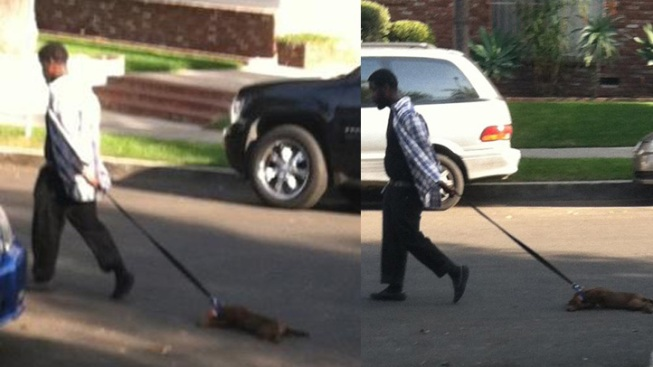 Man Gets Prison Time After Dragging Bloody Puppy Down Street