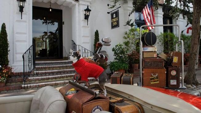 Puppy Love at Carmel's Cypress Inn