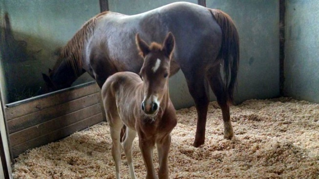 Horsey Heartstrings: Red Bucket's New Baby