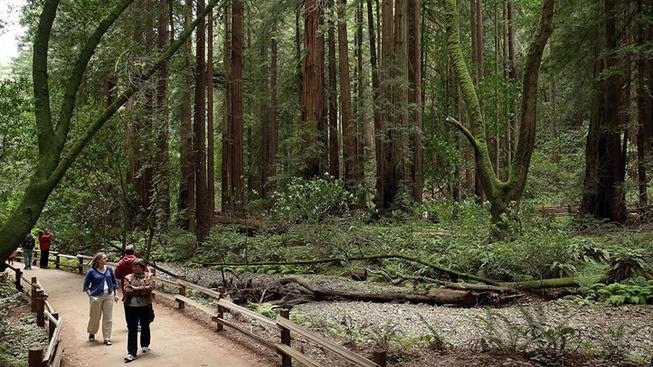 Get Your Pass to the Final Free Redwoods Saturday
