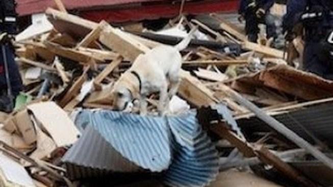 "Canine Teams Wait for ""Bark Alert"""