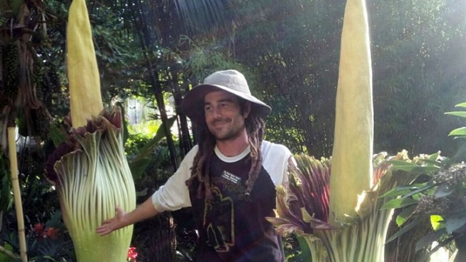 Encinitas Corpse Flower: Back-Up Arrives