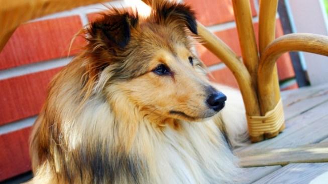 Hound Around Town on National Dog Day