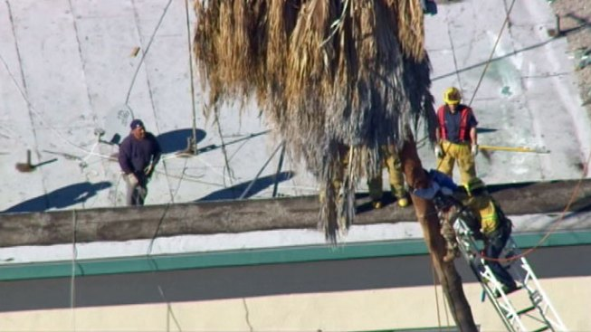 LA Firefighters Rescue Tree Trimmer Hit by Palm Fronds