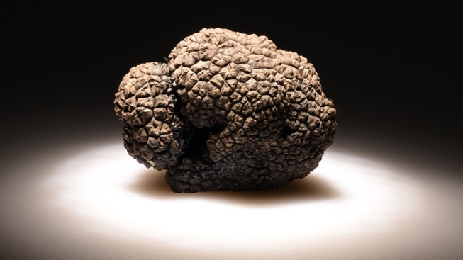 Knobby, Flavorful, Rare: Napa Truffle Fest