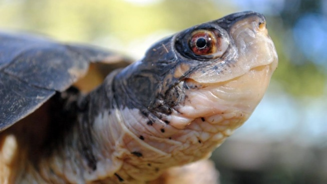 Turtle Awareness Day at Santa Barbara Zoo