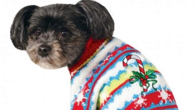 Ugly Sweater Day: Holiday Pet 'Telethon'