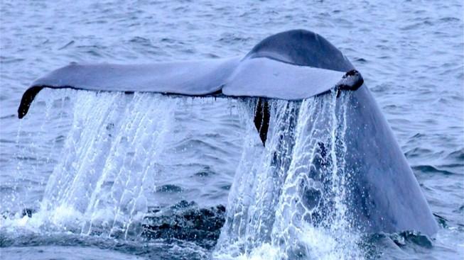 Festive Flukes: Monterey Whalefest