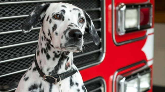 LAFD Dog Takes Stage in 'Peter Pan'