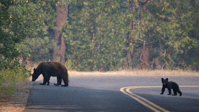 You Can Help: Yosemite Restoration Fund